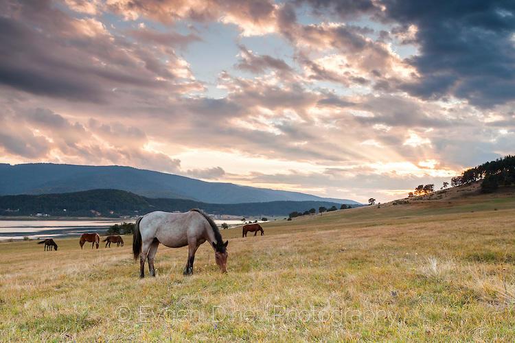 Волен кон