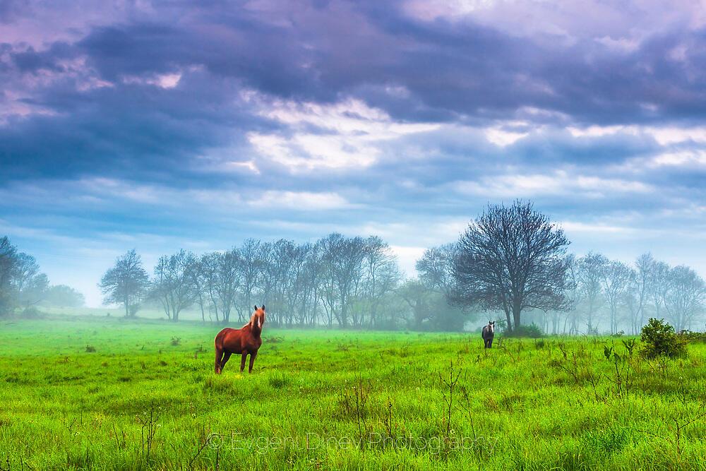 Коне на тучна зелена поляна