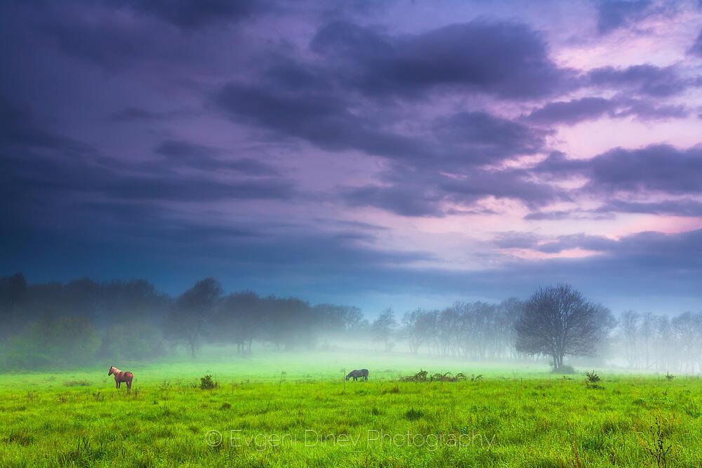 Коне в зелена утрин