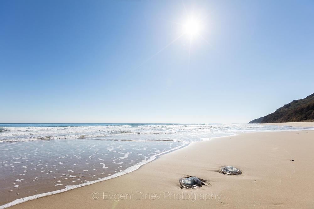 Две медузи изхвърлени на брега