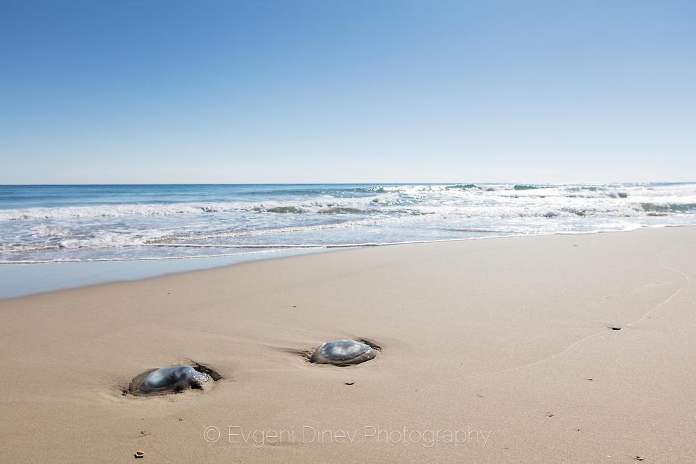 Медузи на пясъка