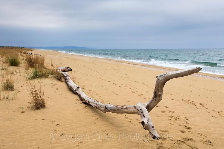 Дългия плаж