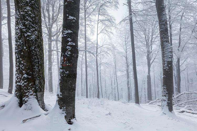 Зимна гора в балкана