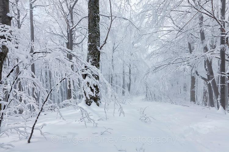 Старопланинска зима