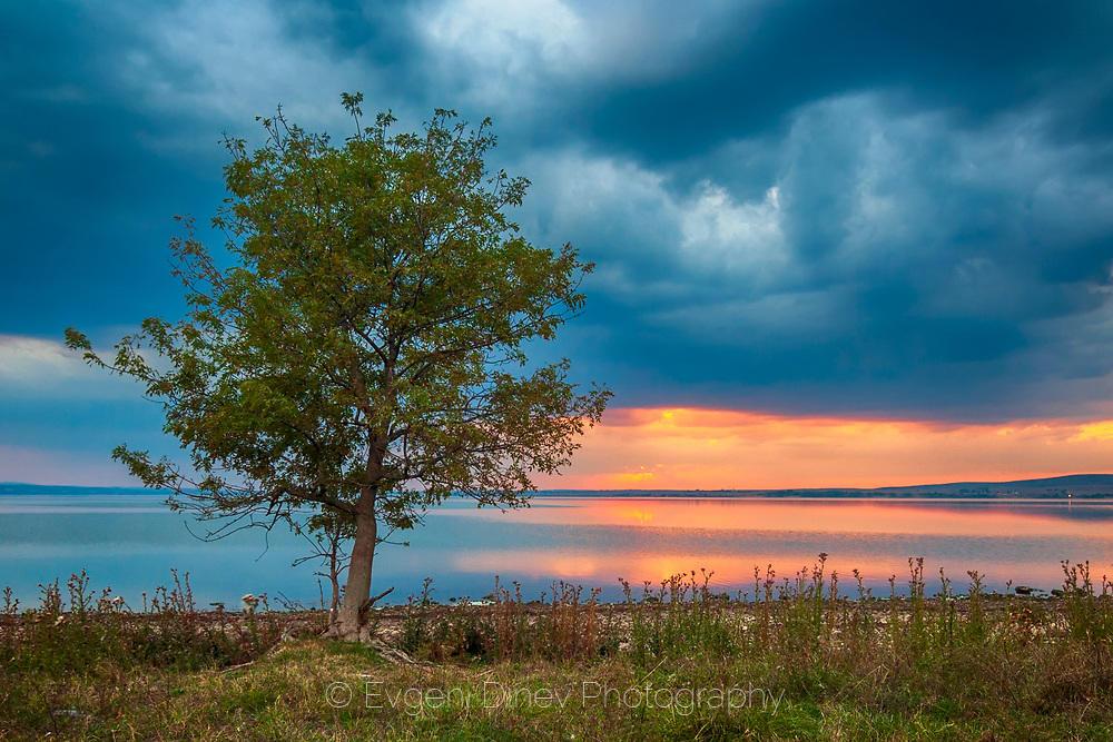 Дърво край Мандренско езеро