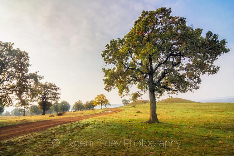 Пейзаж с дърво и черен път