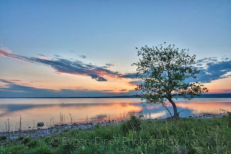 Дърво до езерото