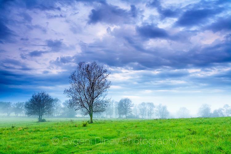 Зелена утринна поляна