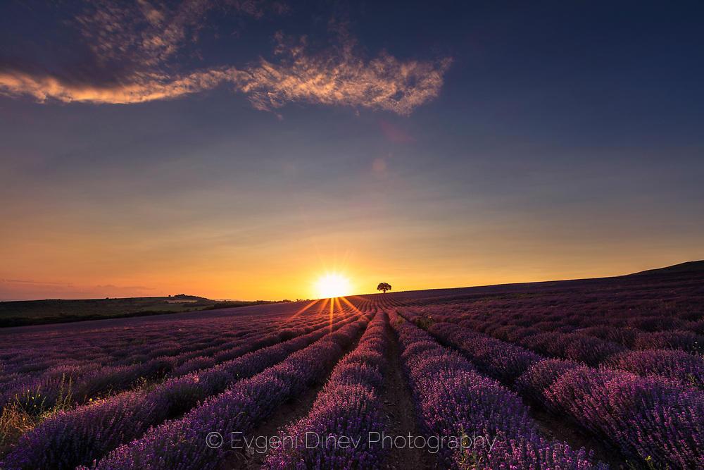 Красиво поле с лавандула