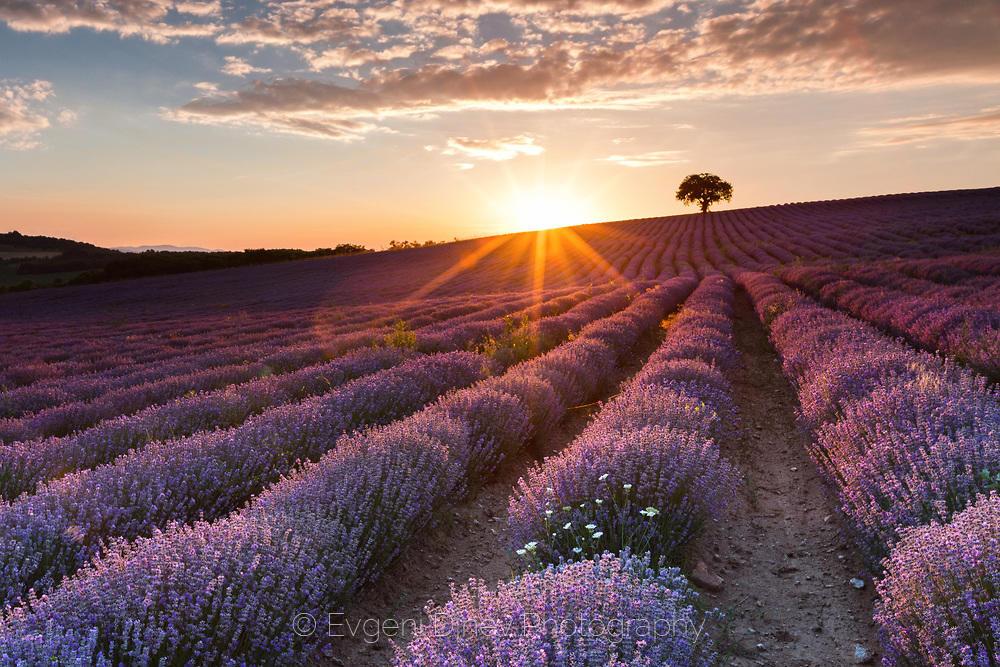 Най-красивото лавандулово поле