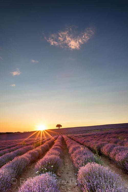Чудесен лавандулов пейзаж