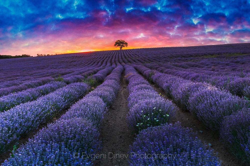 Лилави бразди и пурпурни облаци