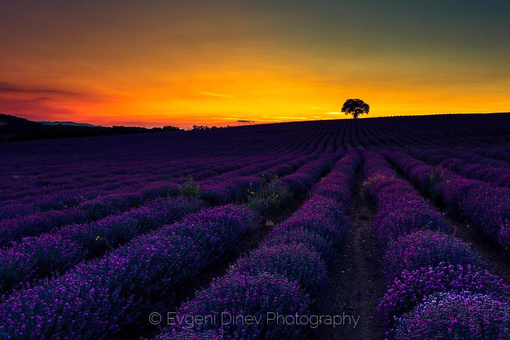 Възхитителен лавандулов пейзаж