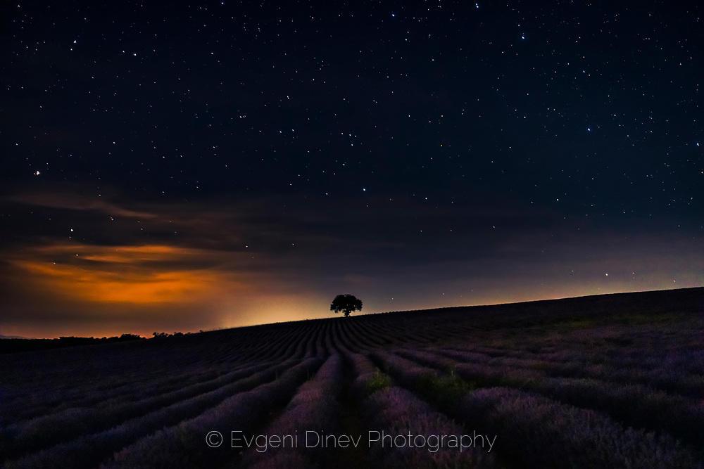Нощно небе и лавандула