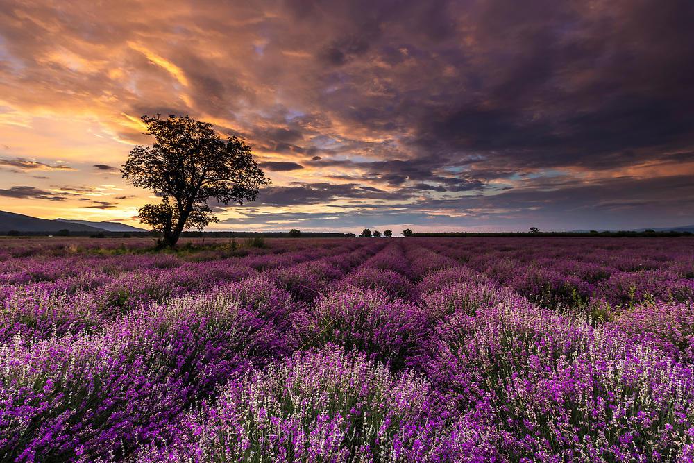 Лилаво поле, лилаво небе