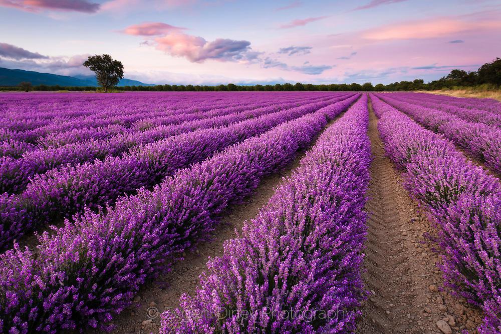 Виолетови бразди