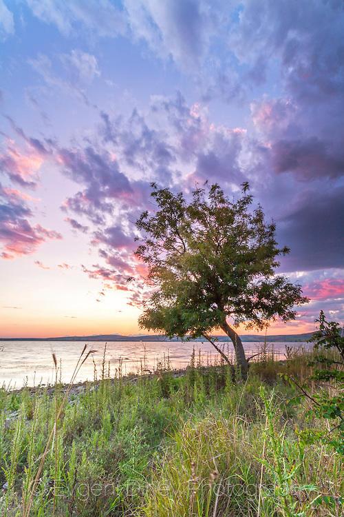 Дърво край езеро
