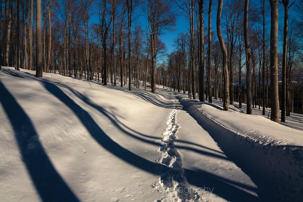 Слънчева зима край Мазалат