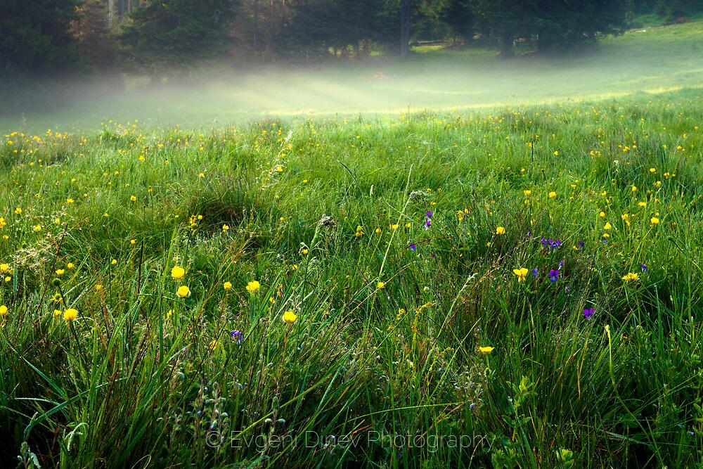 Пролетна поляна