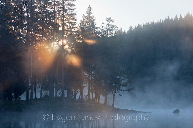 Слънчеви лъчи проблясват през короните на дърветата