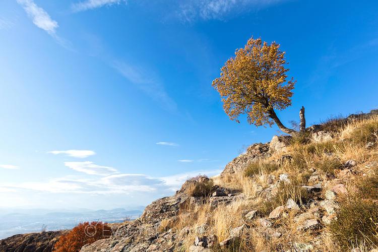Есенно дърво на Моняк