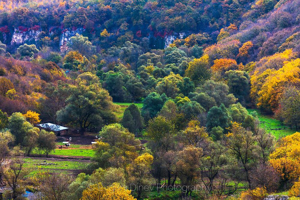 Есенна гора в Русенски лом край Нисово