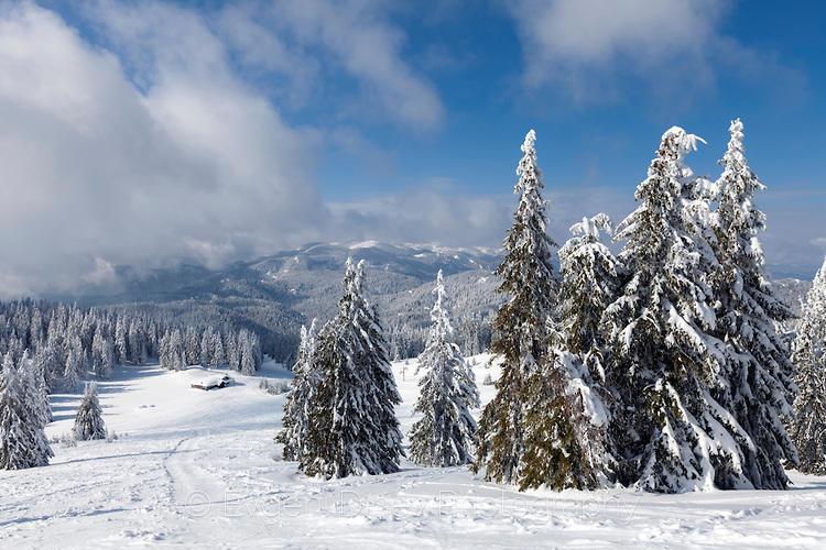 Свеж зимен пейзаж