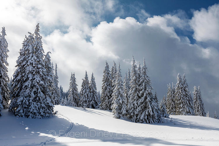 Снежно-бял Родопски пейзаж