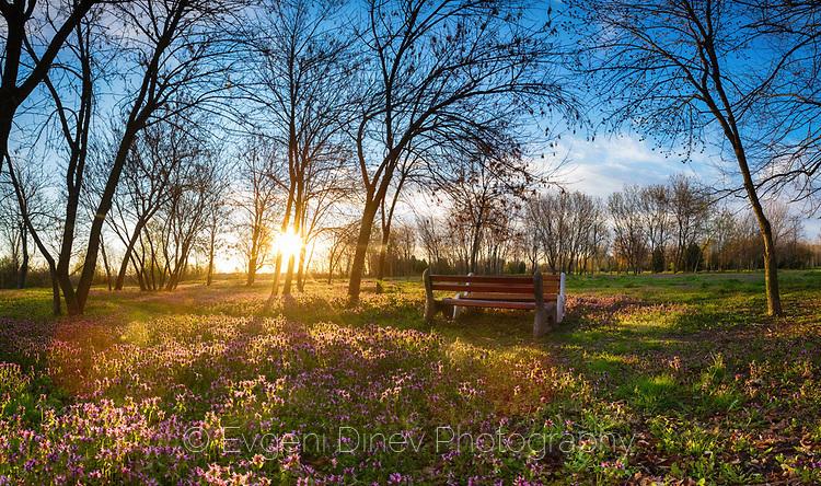 Разцъфнала поляна насред парка обляна в слънчева светлина