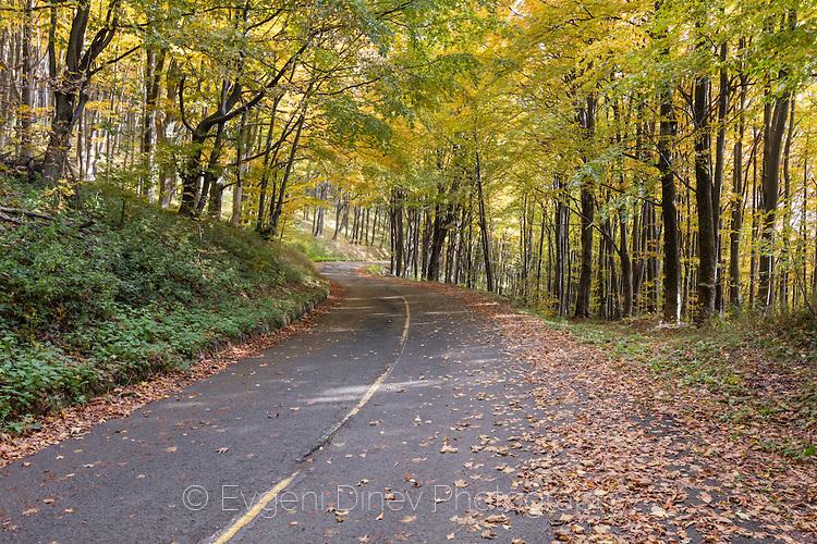 Път в парк Българка през есента