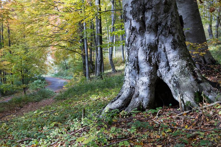 Букова гора в парк Българка