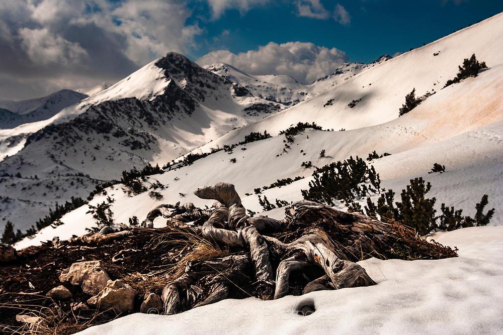 Пирински снежен пейзаж
