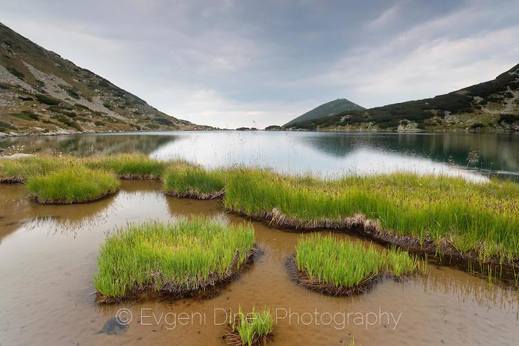 Парчета трева в езеро