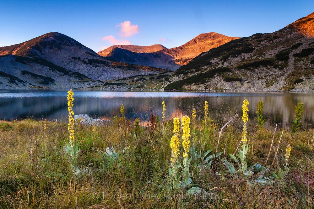 Жълти цветя край Кременските езера