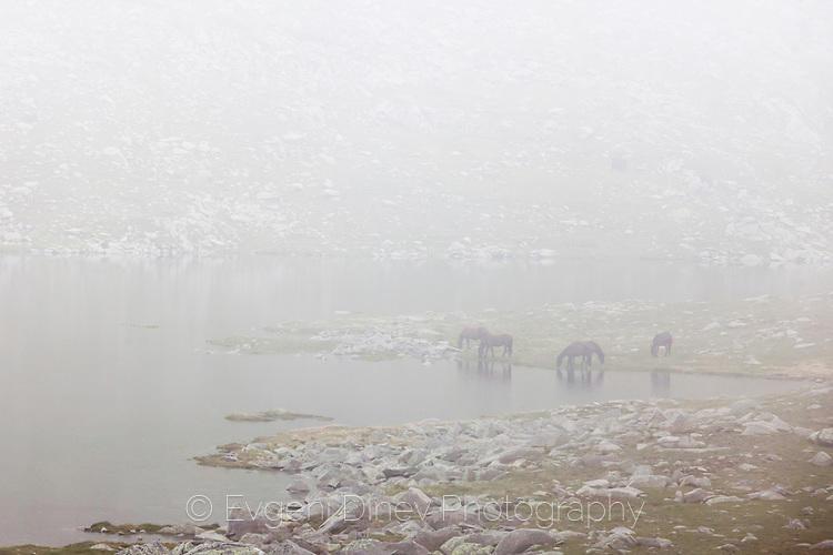 Коне в мъглата край Тевно езеро