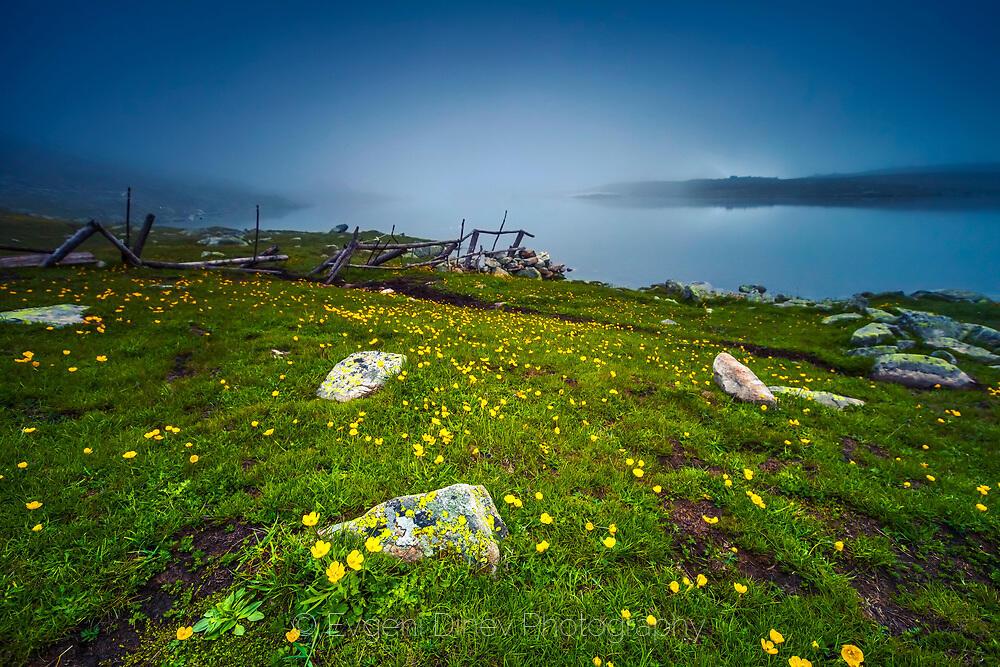 Жълти цветчета на зелена поляна, край мъгливо езеро