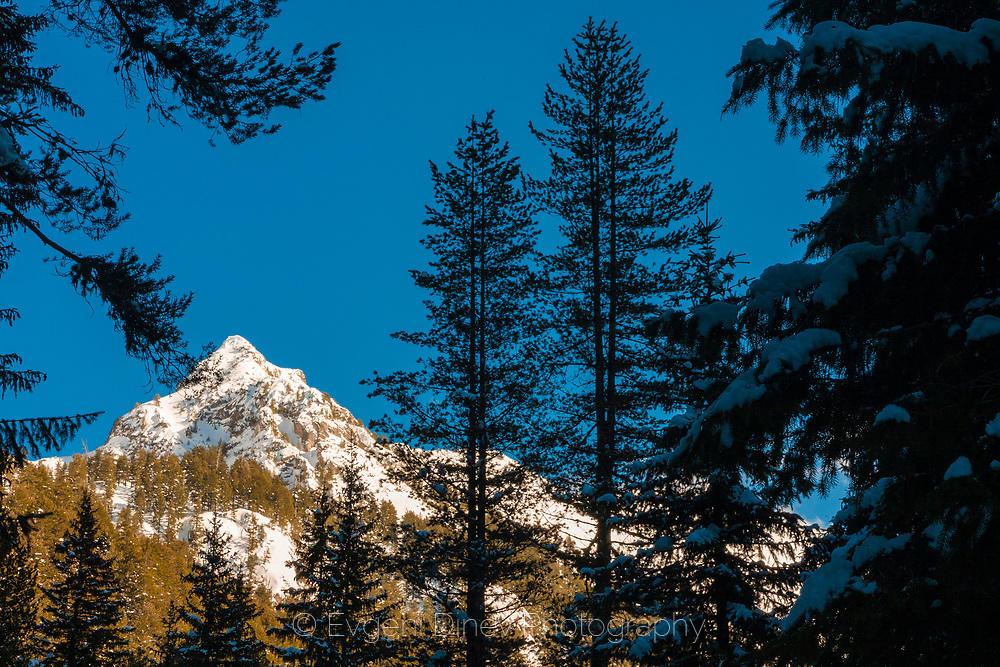 Снежен връх през рамка от борове