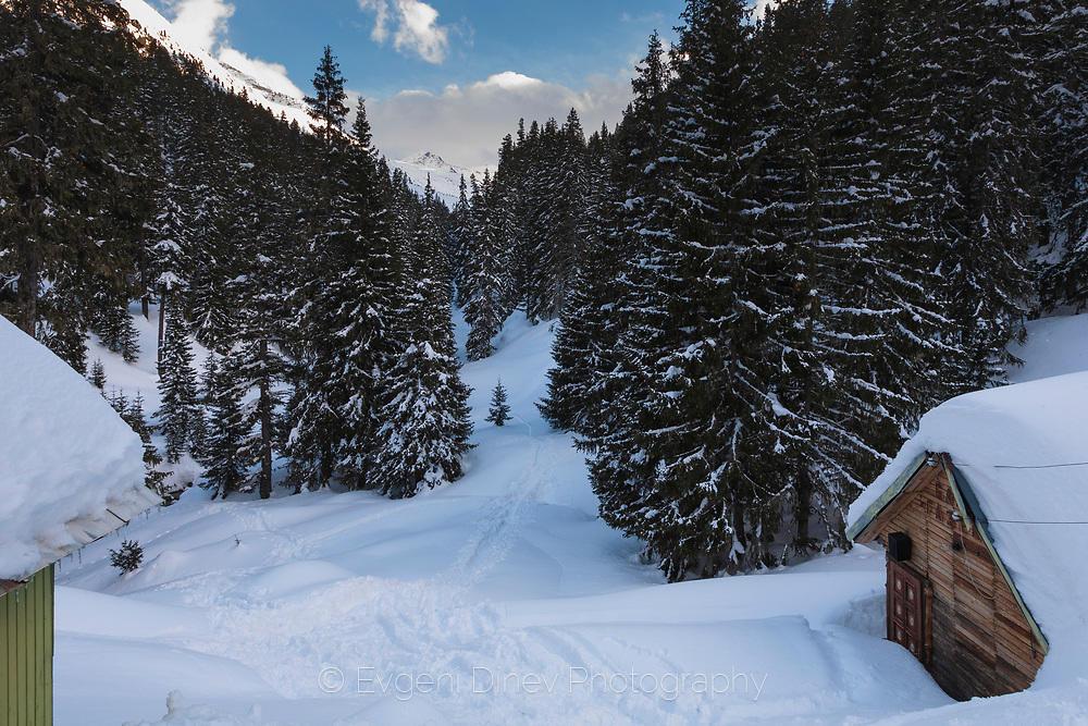 Край хижа Дамяница през зимата