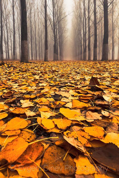 Жълта гора