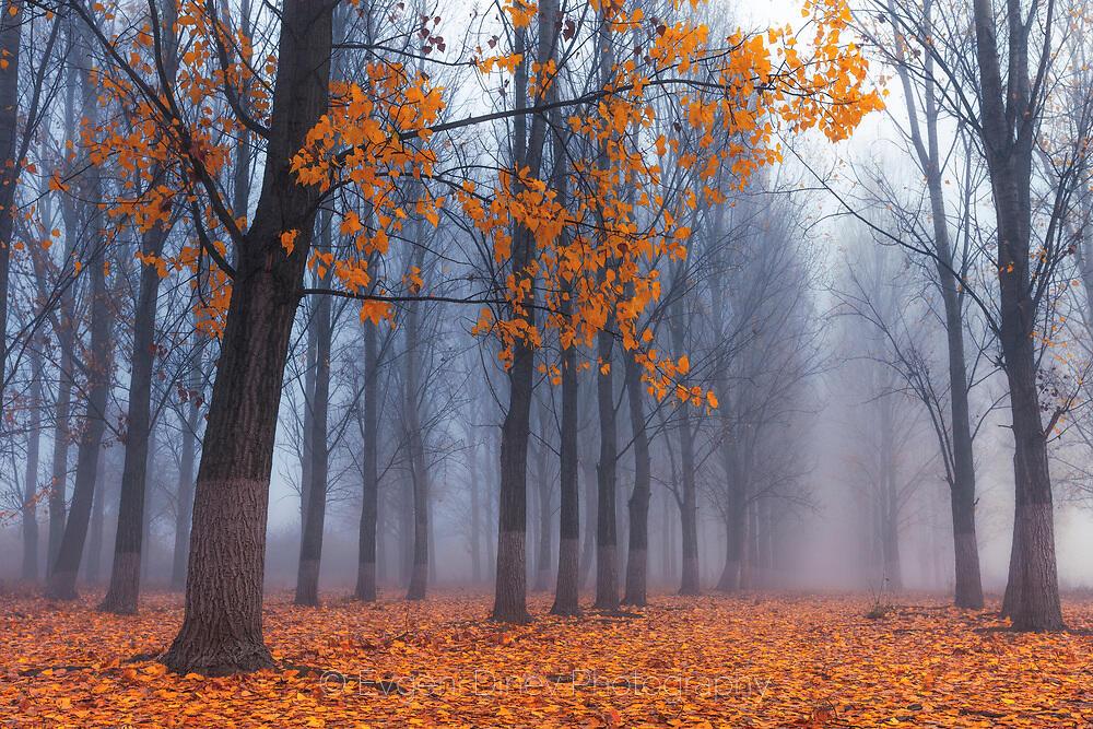 Есенни вестители