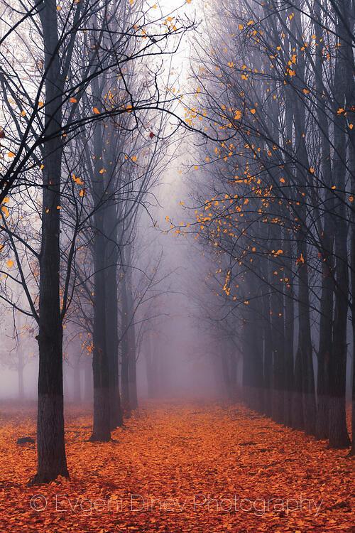 Тополова есенна гора