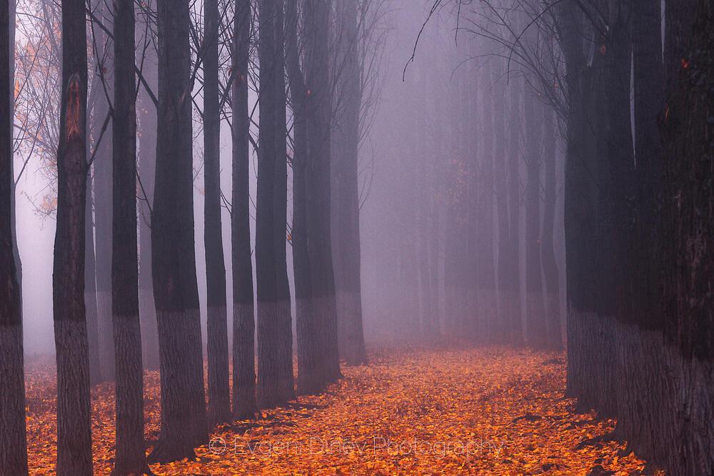 В капана на мъглата