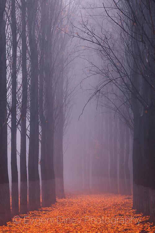Есенни стражи