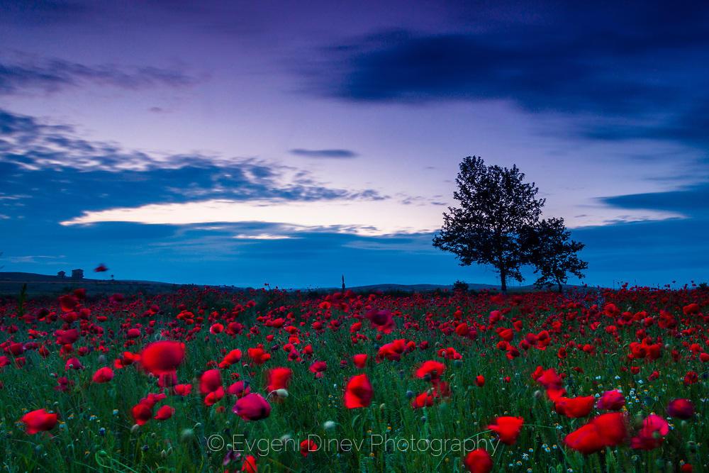 Кърваво поле