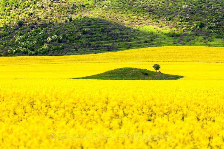 Зелен остров в жълто поле