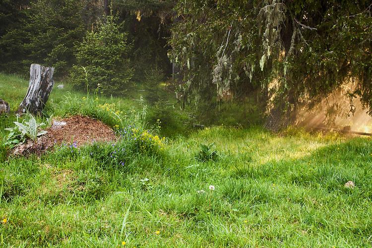 Тучна пролетна поляна в Родопите