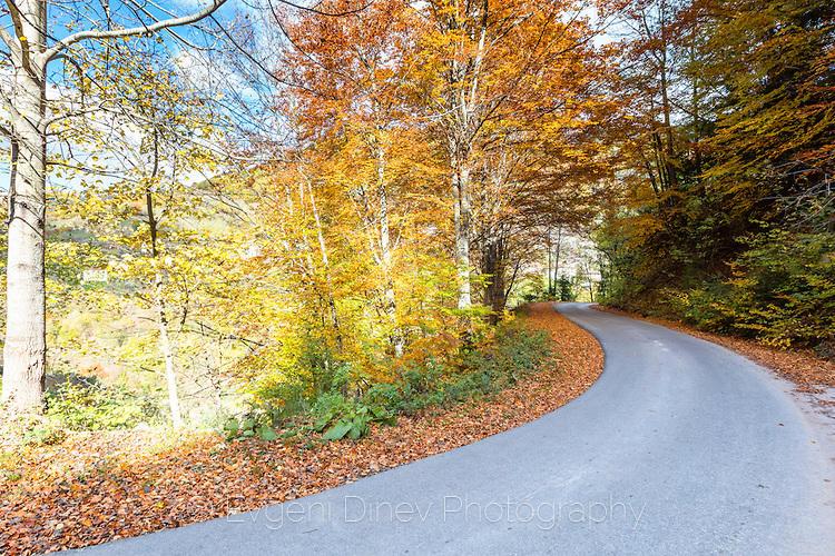 Извит родопски път край село Острица