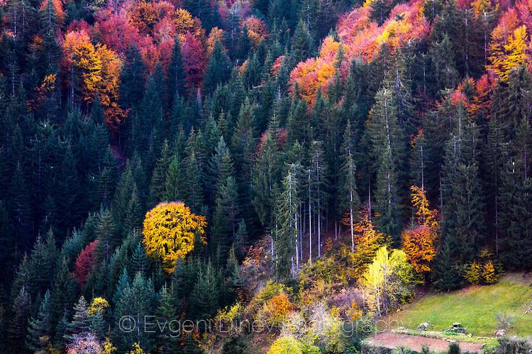 Смесена родопска гора през есента