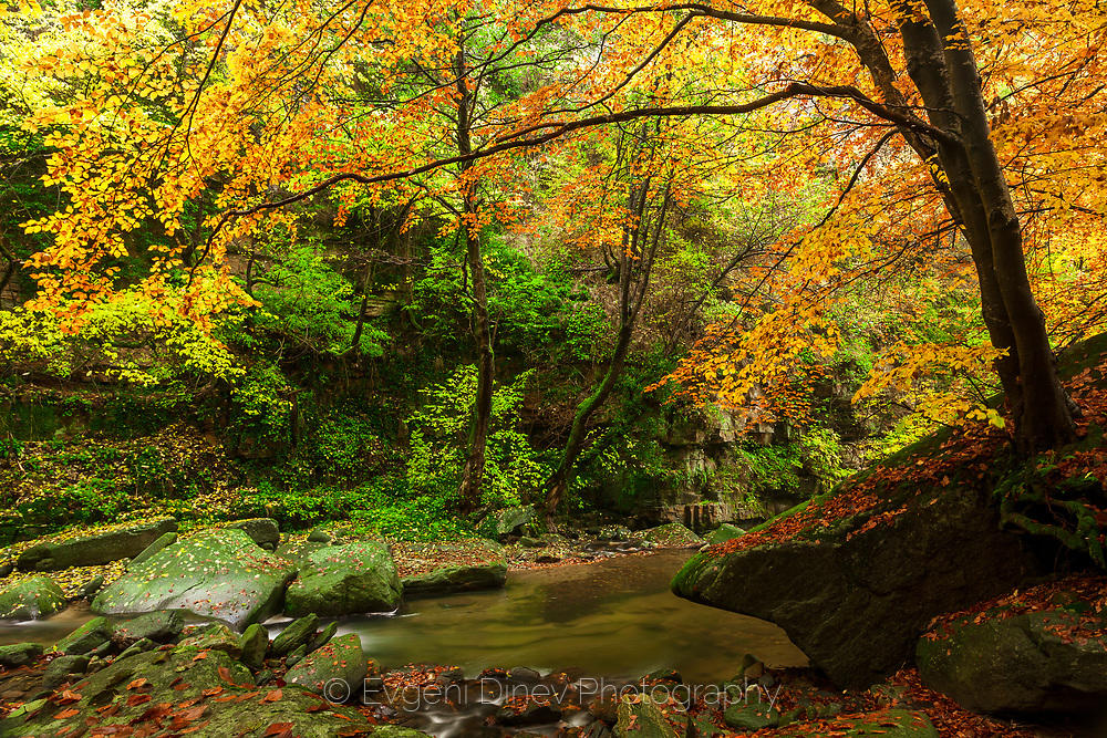 Есенна родопска гора
