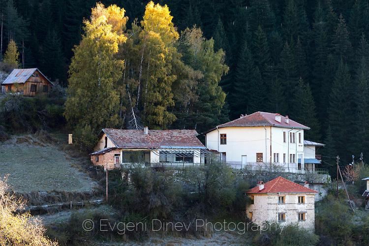 Есенни брези в село Зорница